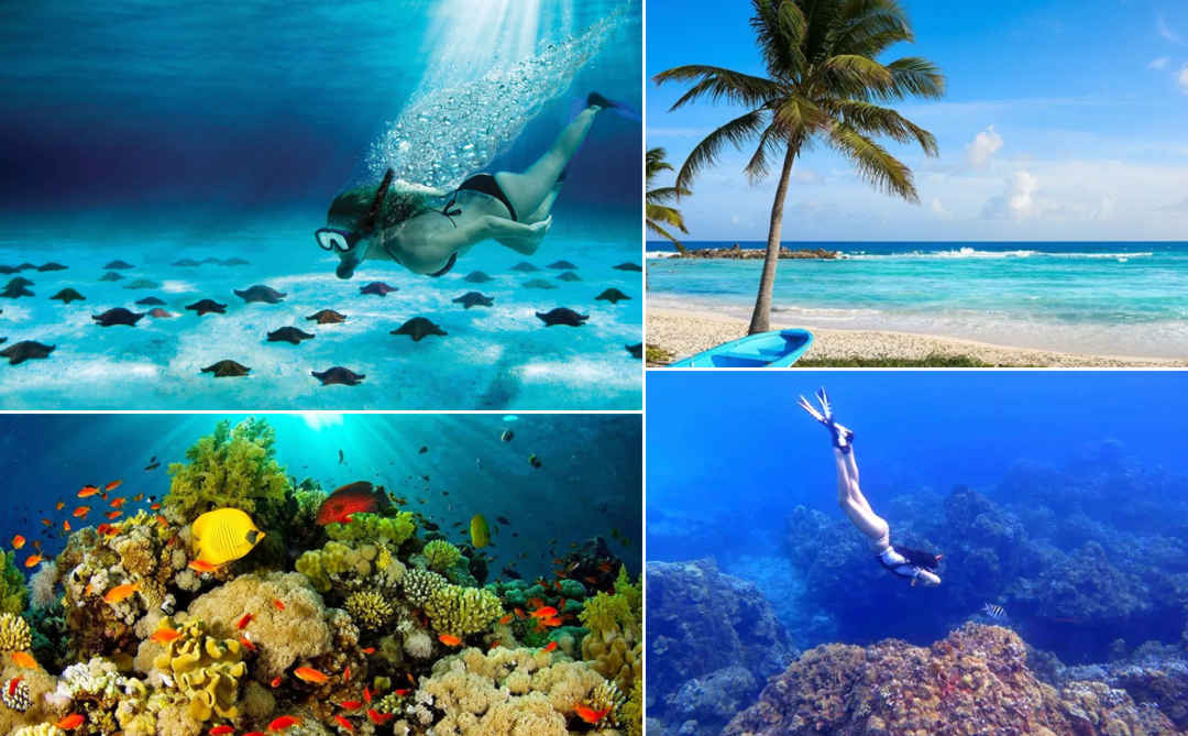 Isla COZUMEL Snorkel en Arrecifes EL CIELO