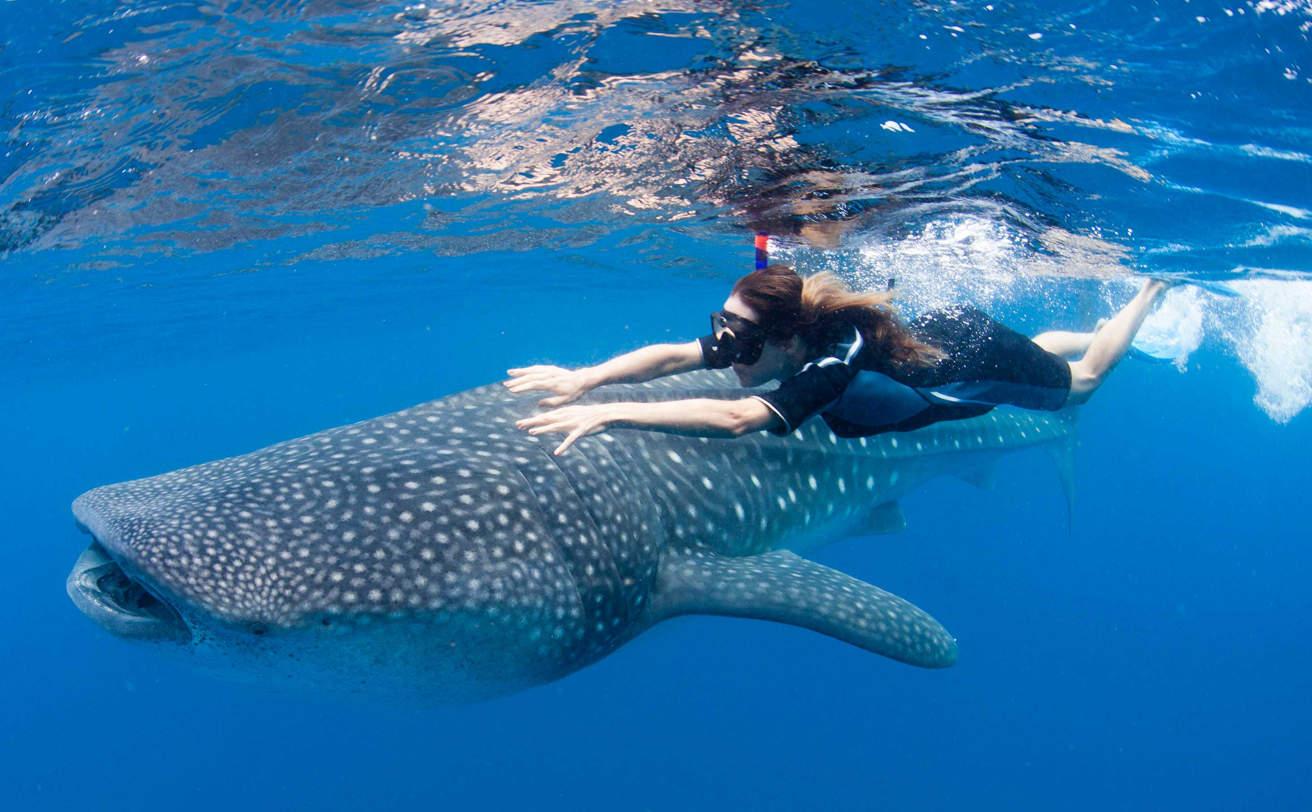 Tiburón Ballena desde la Riviera Maya (Snorkel) | Vg